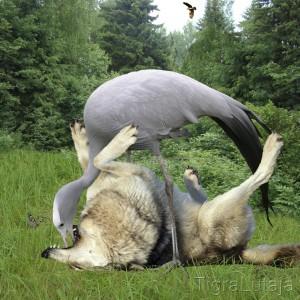 басня крылова волк и журавль