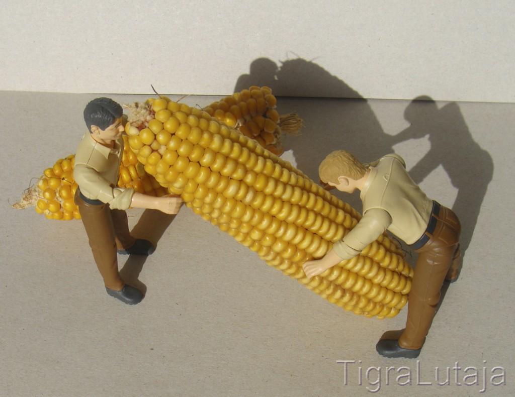 ося и киса и урожай кукурузы