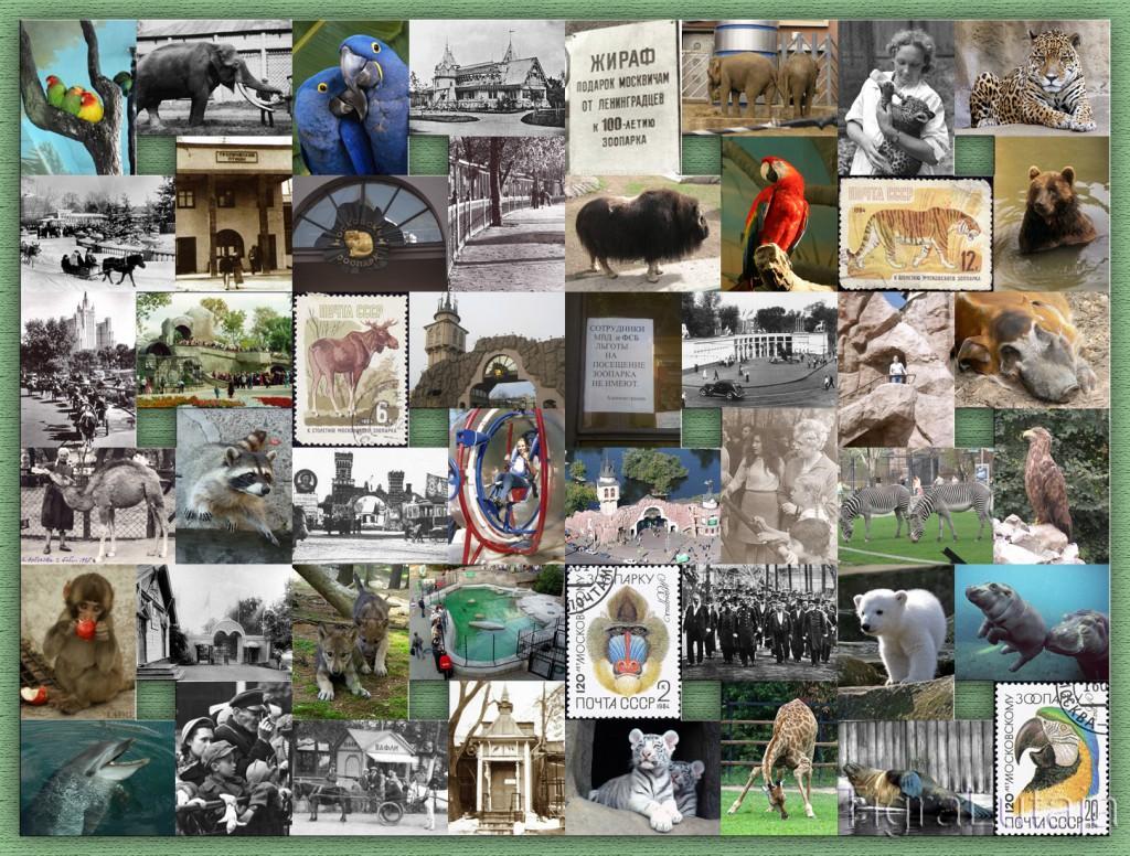 12 февраля: День рождения Московского зоопарка