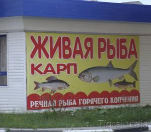 рыба горячего копчения - живая