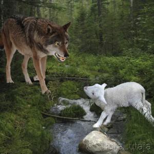 "Басня Крылова ""Волк и Ягнёнок"""