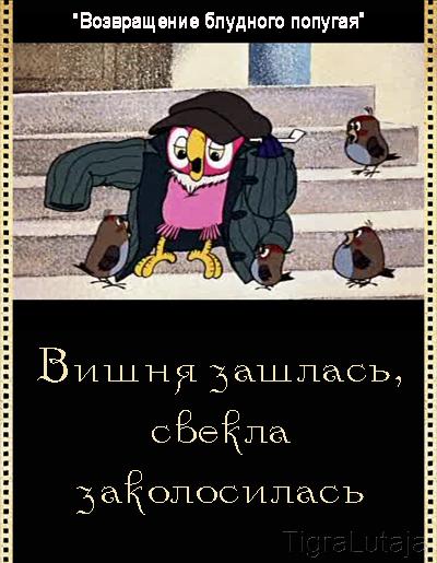 Возвращение блудного попугая
