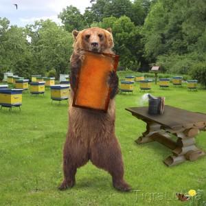 """Басня Крылова """"Медведь у Пчёл"""""""