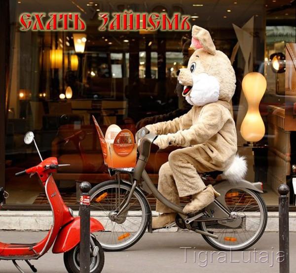 ехать зайцем